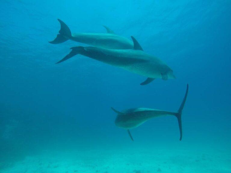 Dolphin House – Shaab el Erg