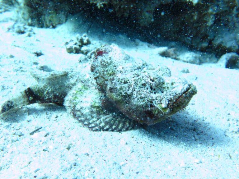 Enriched Air (Nitrox) Diver course